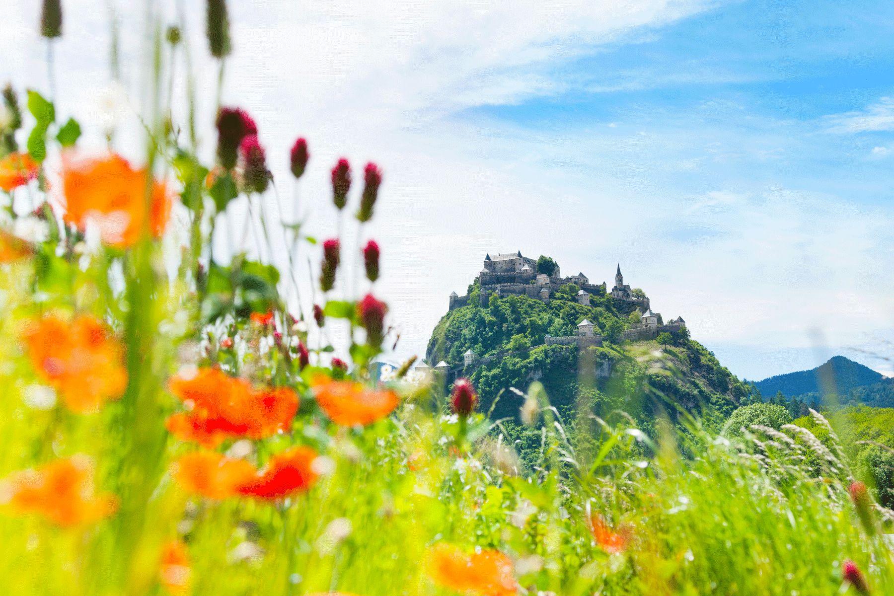 Burg Hochosterwitz Mohnblumen iStock485630077 web