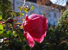 2013 TGoe Bild 2 c Rosengarten Pitten web