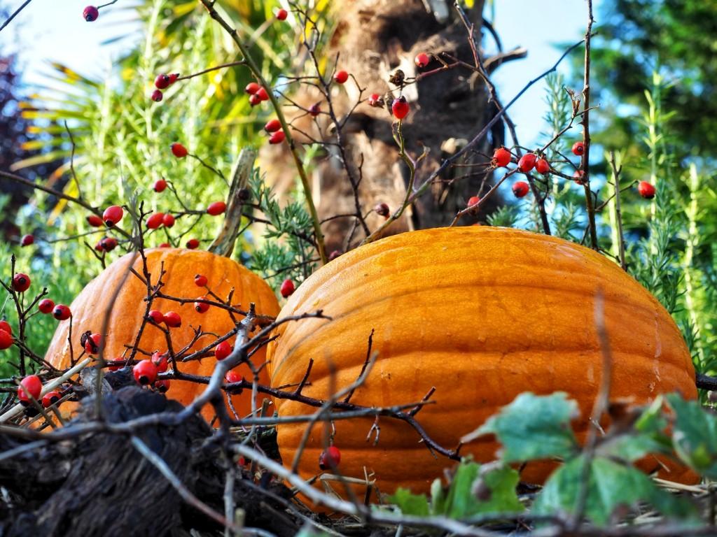 Herbstdekoration 5 klein